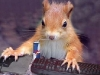 chipmunk_on_computer
